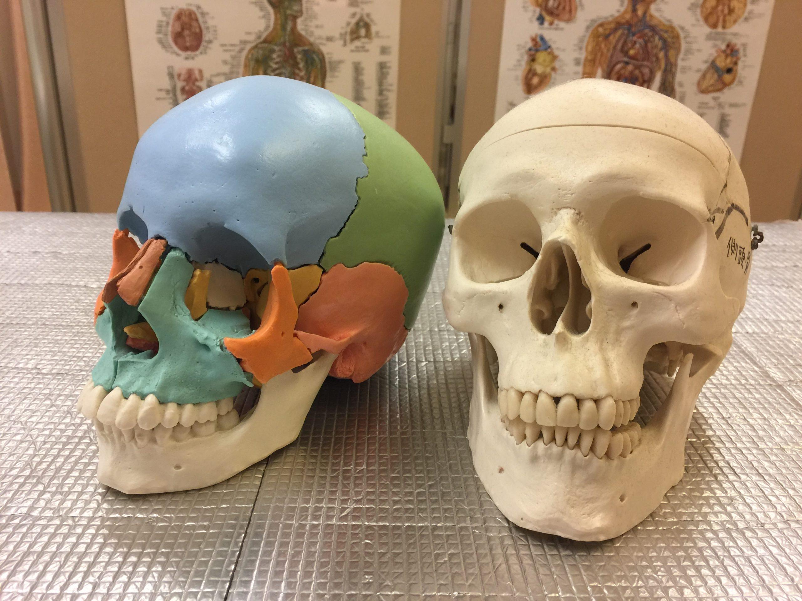 本格整体院高久 大泉学園店 頭蓋骨調整 治療の練習